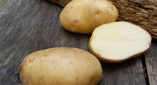 Низкокрахмальные плоды с превосходным вкусом — картофель София: описание сорта и отзывы