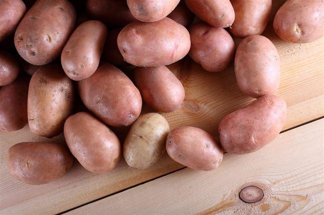 Картофель Сиреневый туман: описание сорта, фото, отзывы