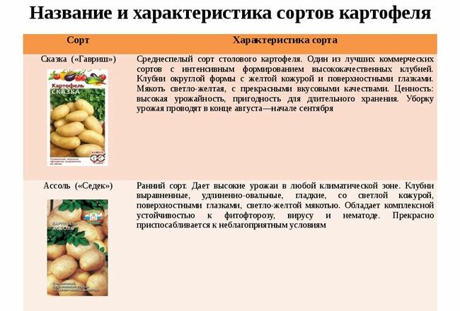 Характеристика картофеля Сказка