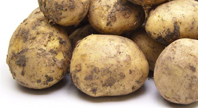 """Сорт картофеля """"Спринт"""""""