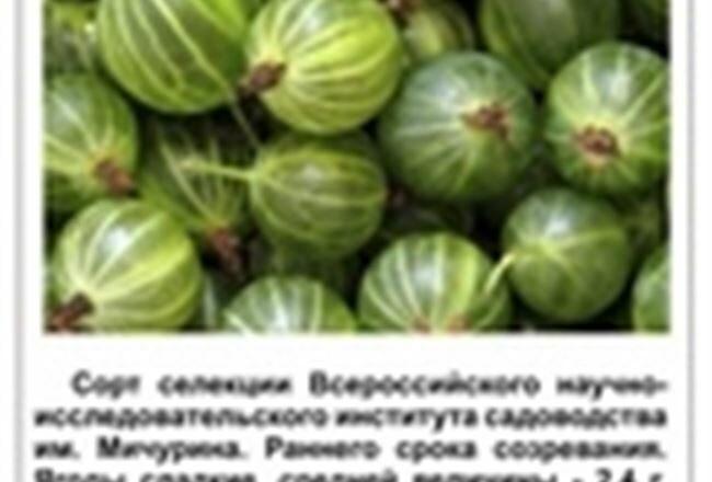 Крыжовник Челябинский слабошиповатый: основные характеристики