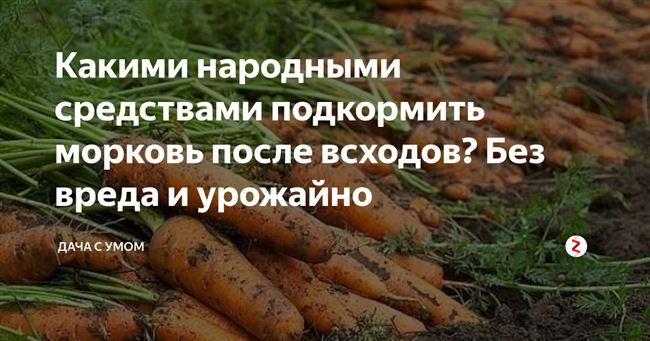 Правила подкормки моркови